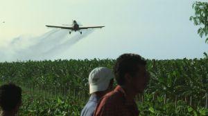 מטוס ריסוס מעל מטעי בננות בניקרגואה